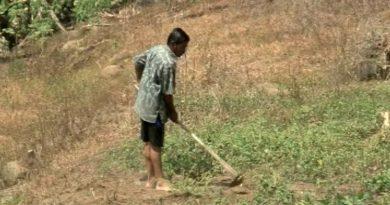 Drought Sweeps Through Fiji
