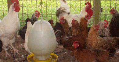 Local Poultry Farmers Appeal for Assistance