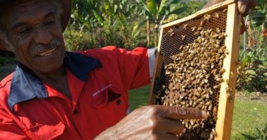 'Honey Hotline' Extension Service Launched to Help Bee Farmers