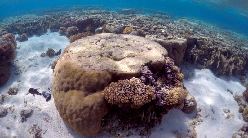 A large piece of coral can be seen in the lagoon located on Lady Elliot Island and 80 kilometers north-east from the town of Bundaberg in Queensland, Australia, June 9, 2015. REUTERS/David Gray