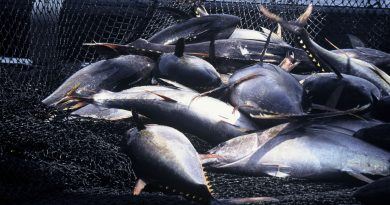 Climate Change Affecting Tuna Stock