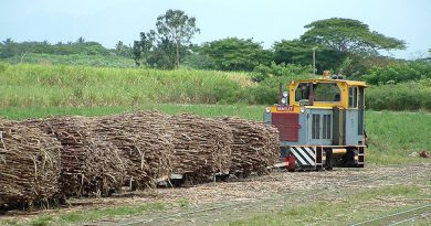 Fiji: Re-planting Grant To Help Cane Farmers