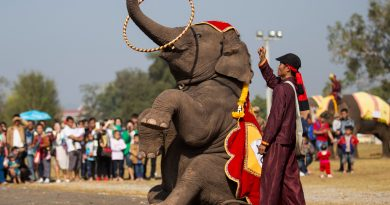 Elephants on parade in Laos as numbers dwindle