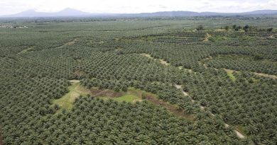 New Britain Palm Oil navigating through critical economic times