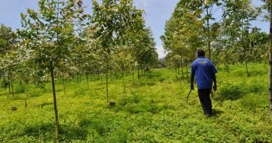 Local Baining People Grow Through Forest Conservation Project Partnership