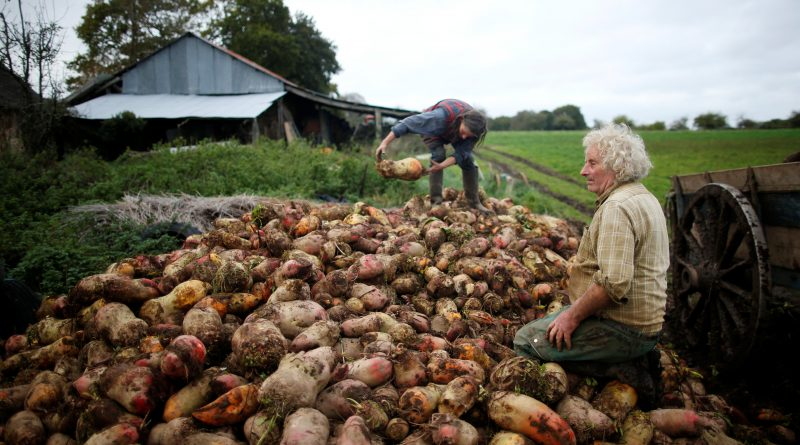 Wider Image: French farmer finds happiness in life before machines